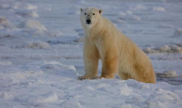 Workshop fotografico Canada con Luca Bracali nel regno degli orsi polari