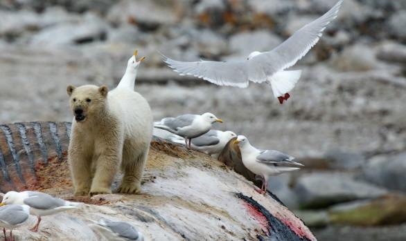 Workshop fotografici Svalbard con Luca Bracali