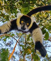 Viaggio fotografico in Madagascar con Luca Bracali