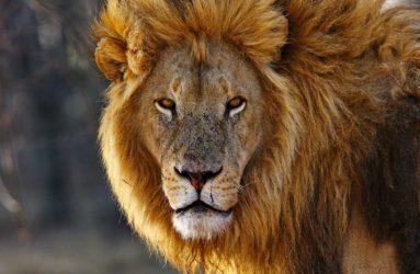 Viaggio fotografico in Kenya con Luca Bracali Lion