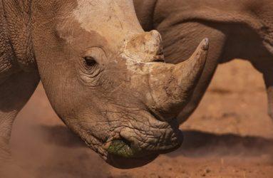 Viaggio fotografico in Kenya con Luca Bracali - Rinoceronte