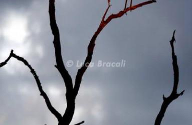 Luca Bracali Wildlife Photographer