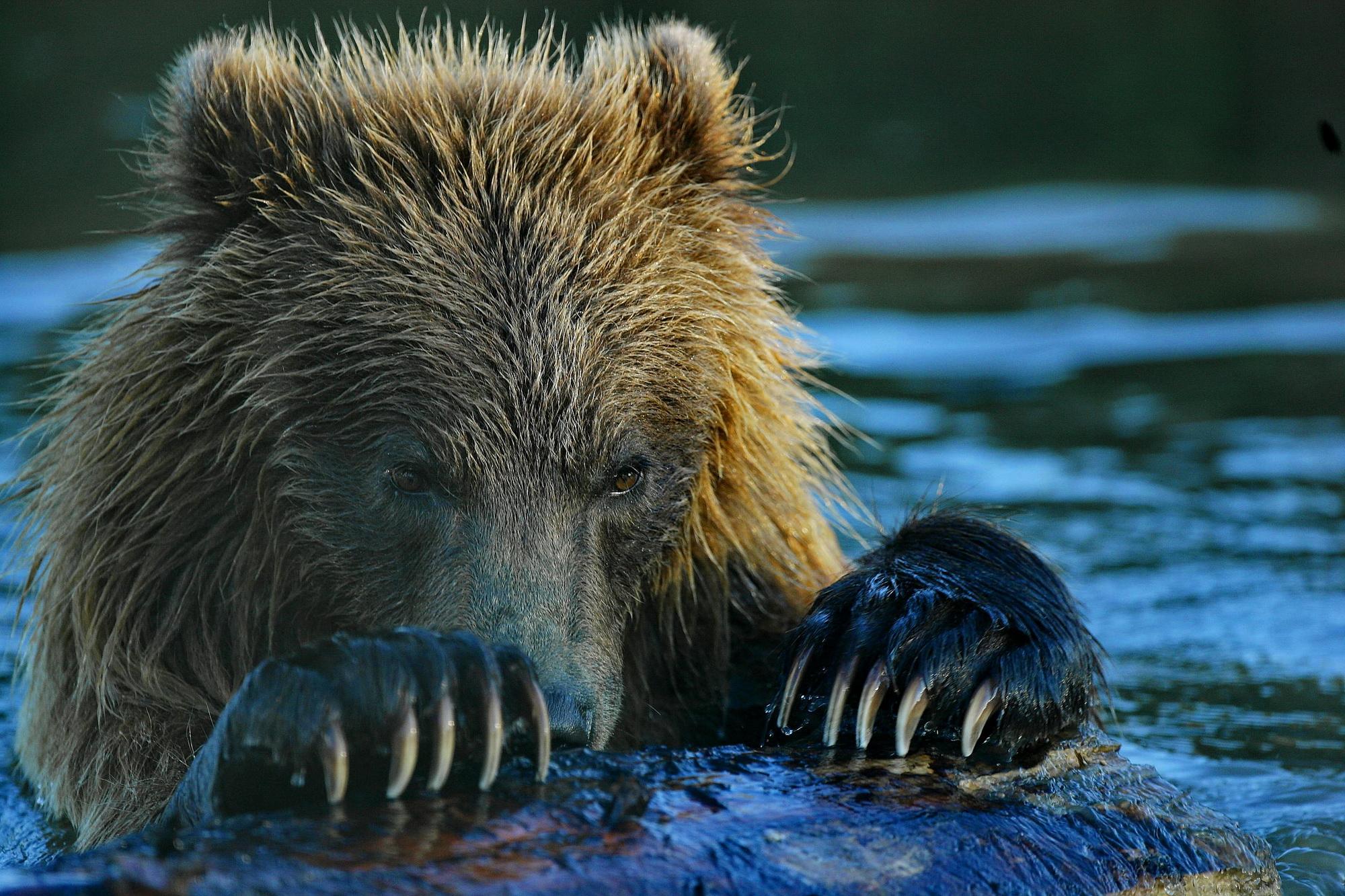 Alaska_VG3X6708_∏ Luca Bracali