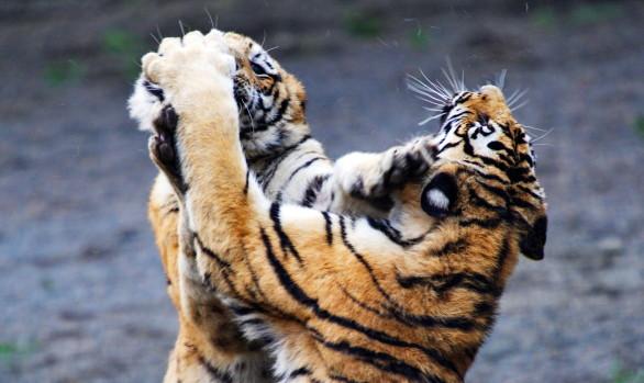 Tiger Safari con Luca Bracali