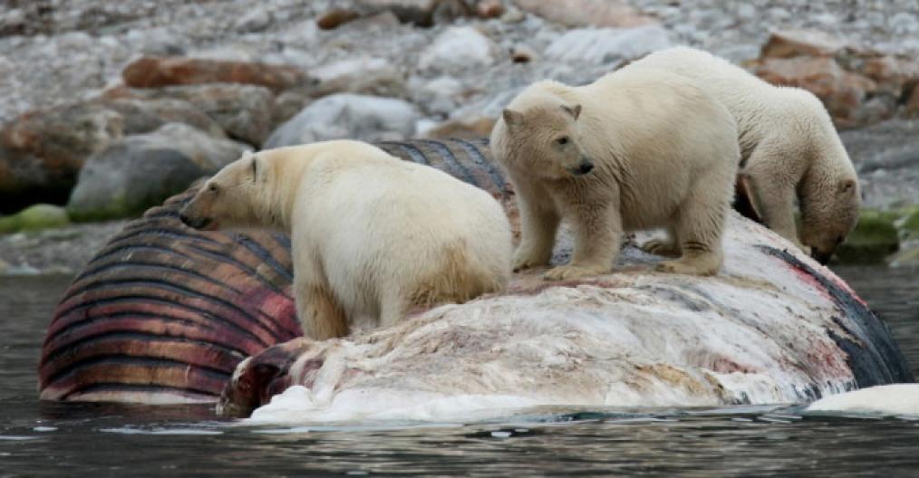 Viaggio fotografico alle isole Svalbard
