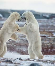 """Luca Bracali - Mostra fotografica """"Artic Under Attack"""" al Parlamento Europeo di Bruxelles"""