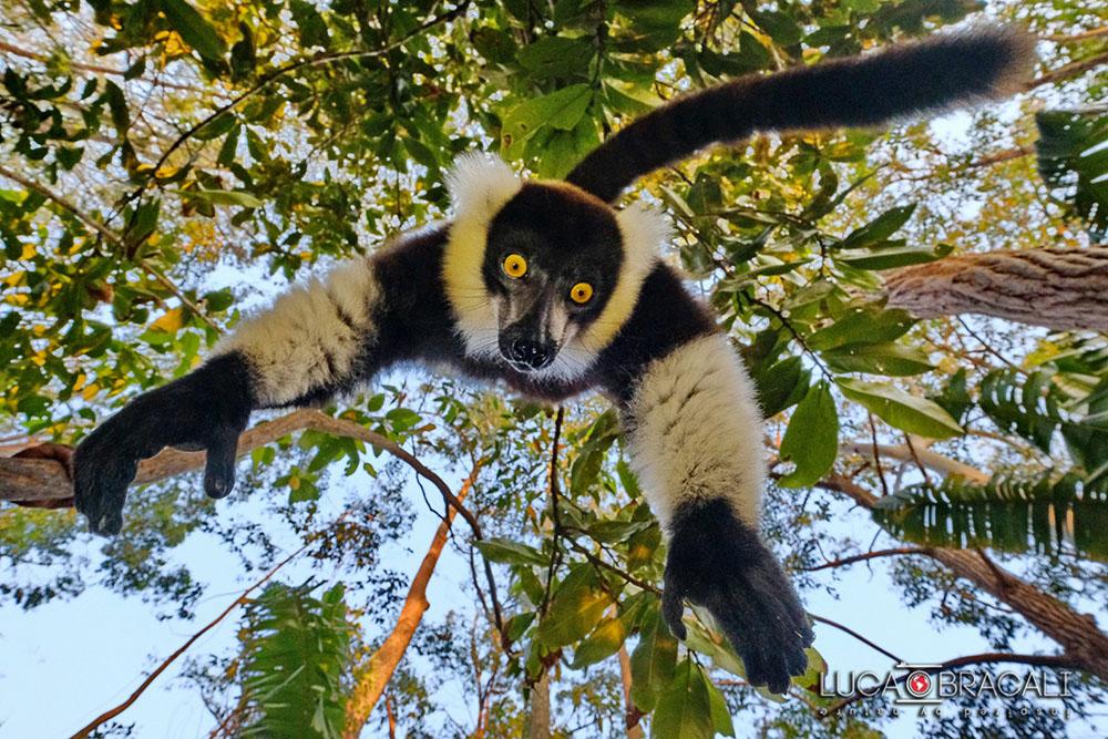 Madagascar_2017_Luca_Bracali01