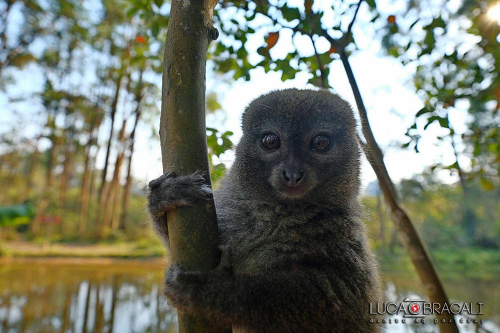 Madagascar_2017_Luca_Bracali03