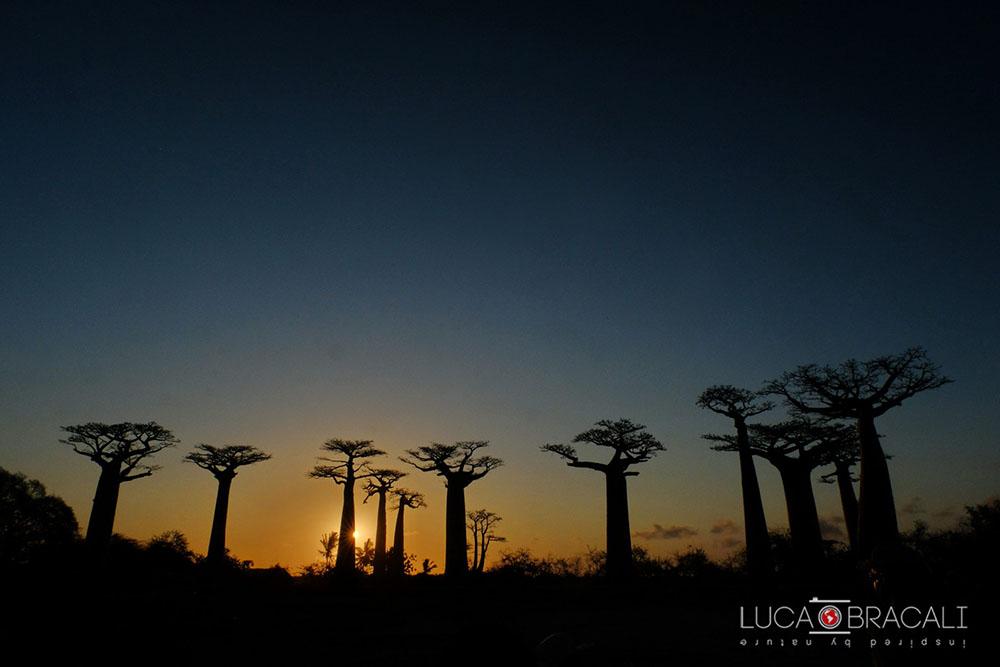 Madagascar_2017_Luca_Bracali22