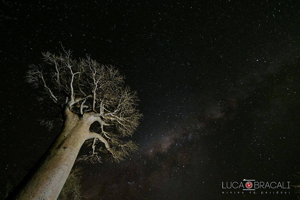Madagascar_2017_Luca_Bracali23