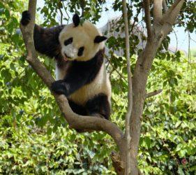 Viaggio fotografico in Cina