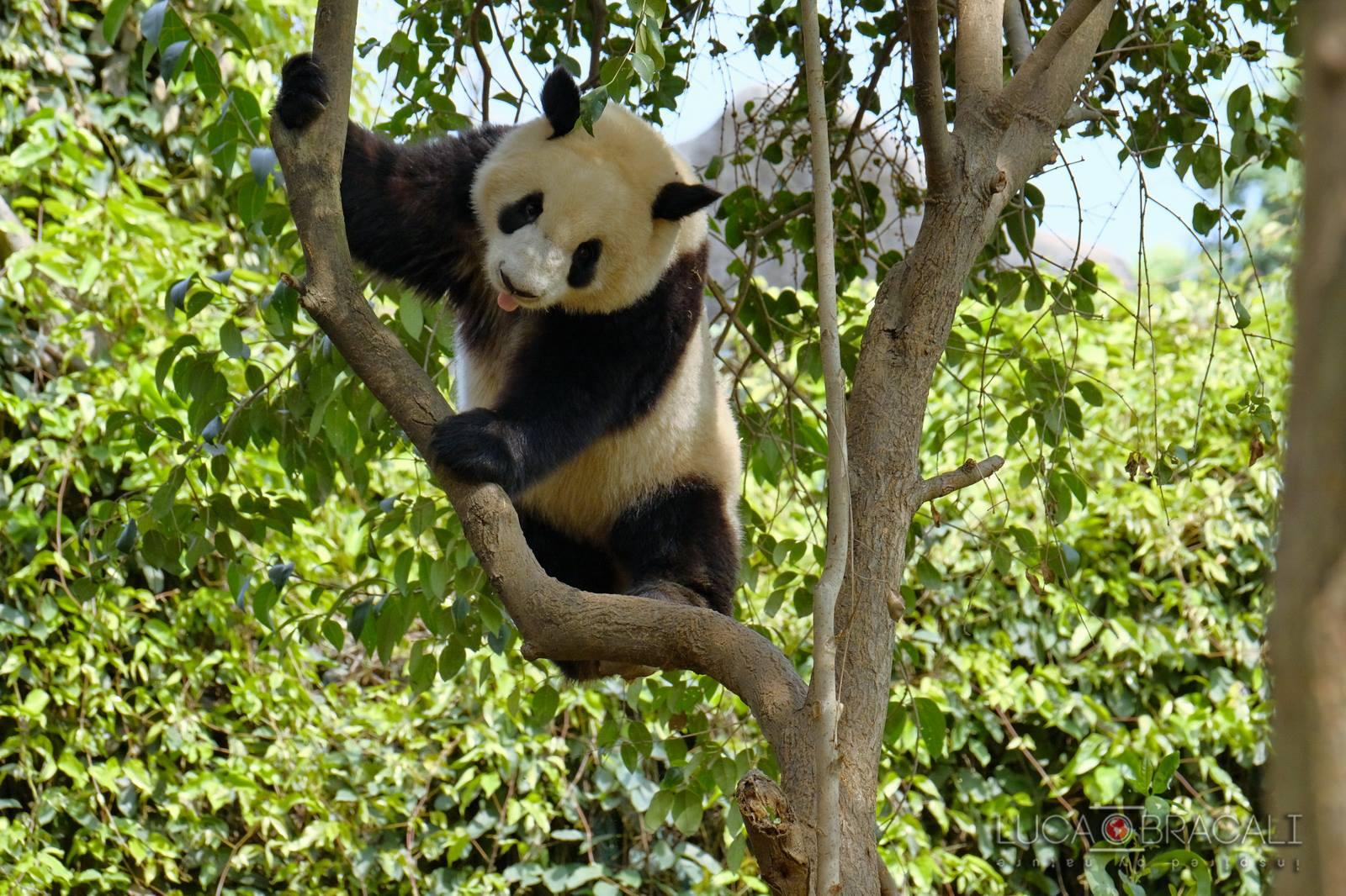 Viaggio fotografico in Cina_Panada