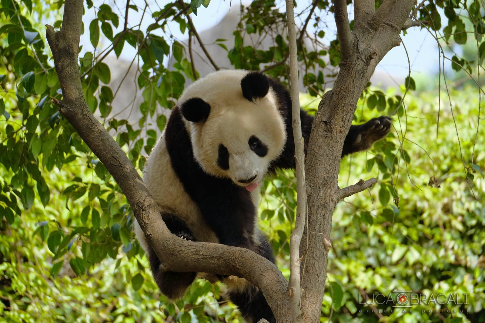 Viaggio fotografico in Cina_Panada1