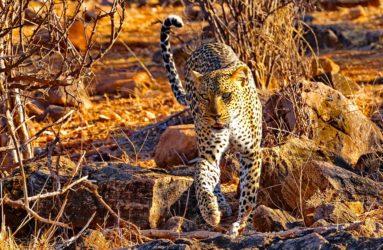 Viaggio fotografico in Kenya con Luca Bracali
