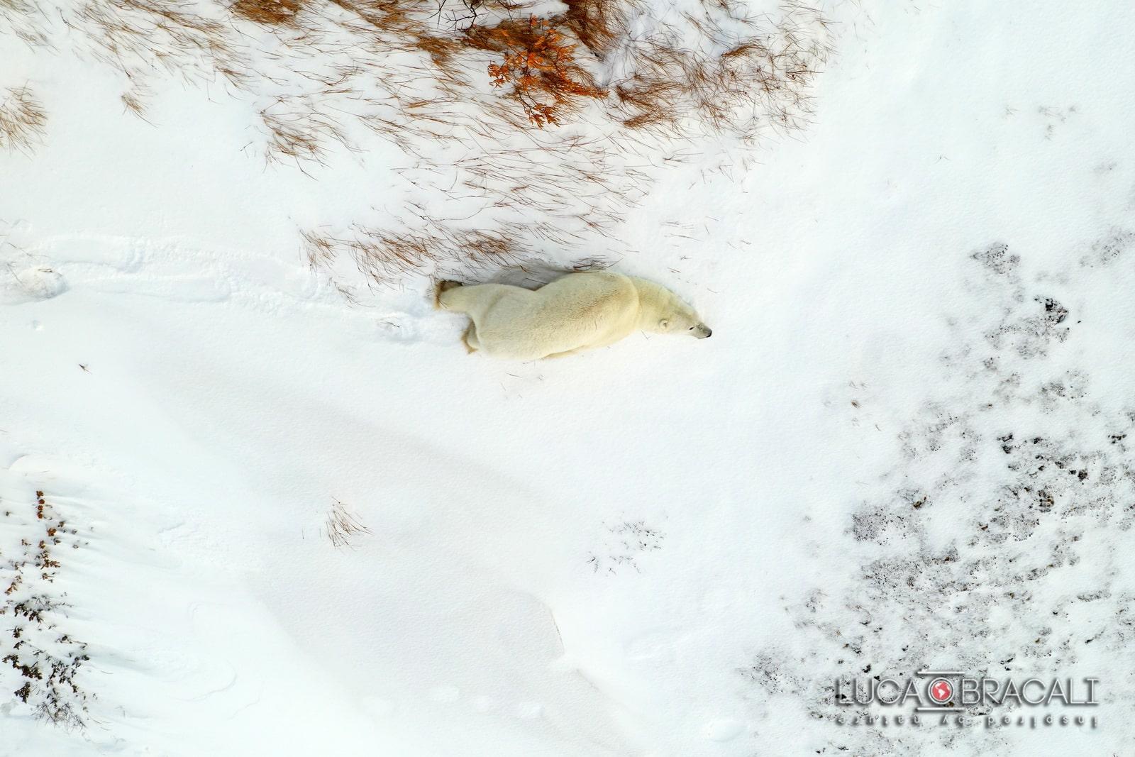Viaggio fotografico Canada orsi polari 02-min