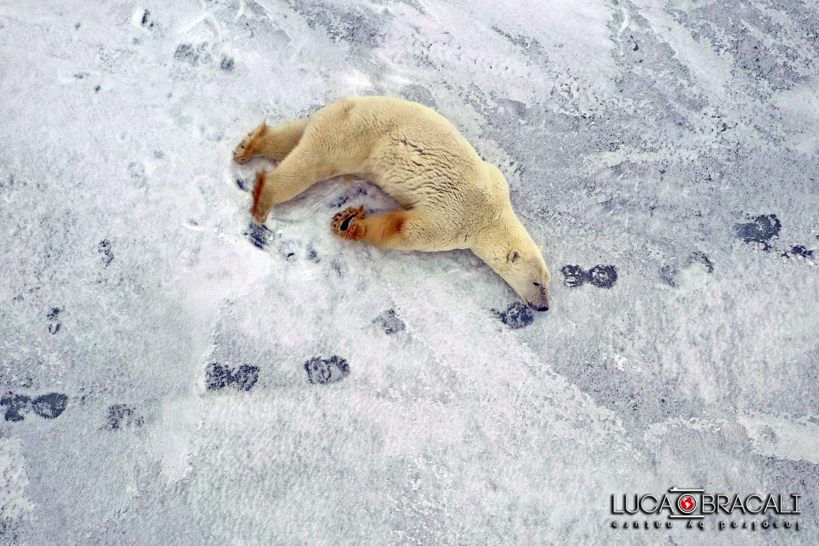 Viaggio fotografico Canada orsi polari 05-min