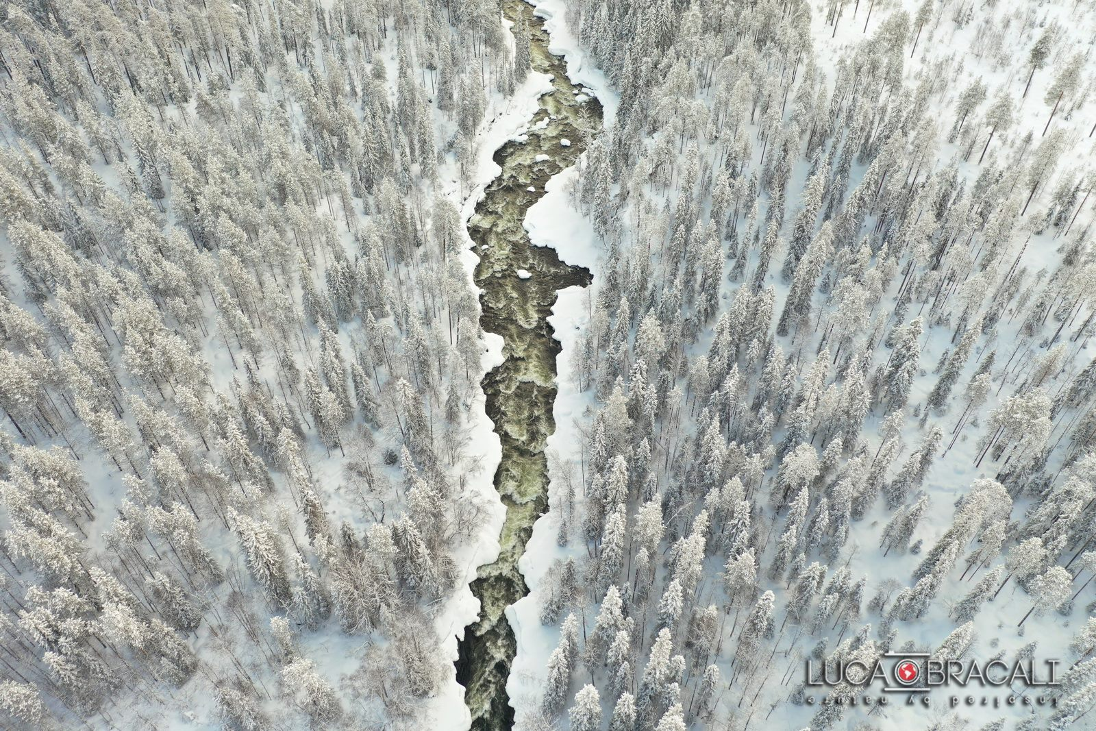 Lapponia_Finlandese_forest