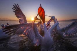 Viaggio fotografico in Grecia, Lago Kerkini