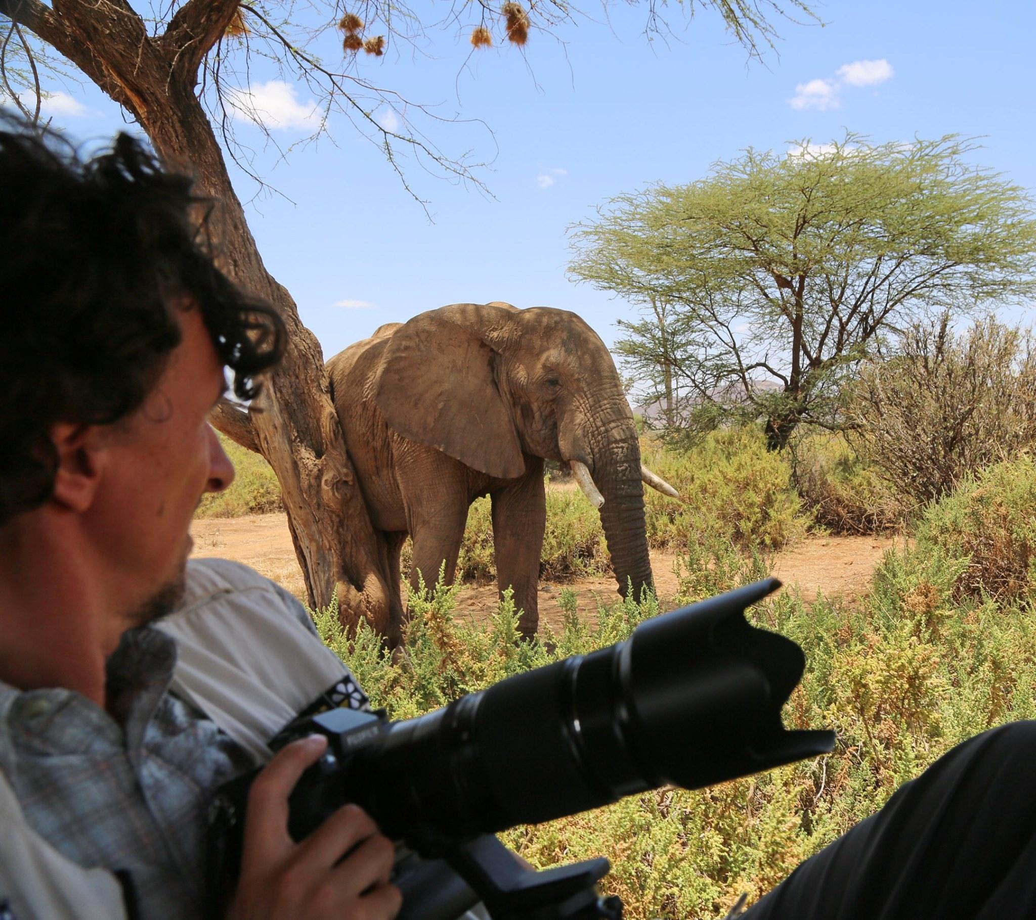 Kenya_elefante