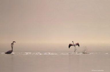 Viaggio fotografico in Grecia, Lago Kerkini, con Luca Bracali