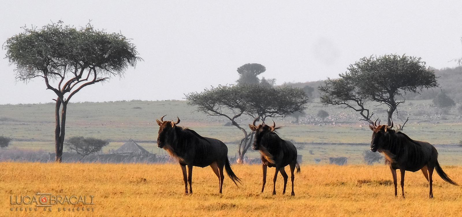 kenya_animali_2