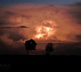 Viaggio fotografico in Kenya, Masai Mara