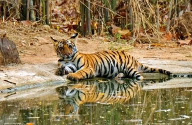 Viaggio fotografica in India, Tiger Safari