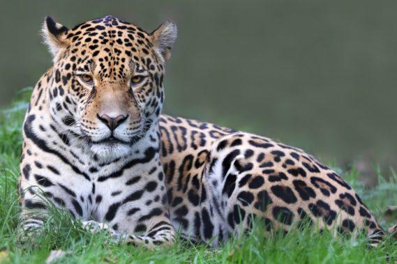 Viaggio fotografico in Brasile, Pantanal