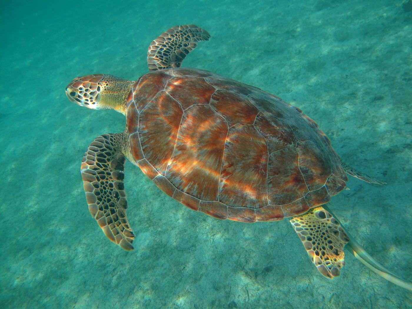 Viaggio fotografico Isole Vergini_00005