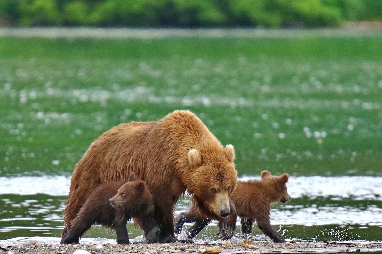 Viaggio fotografico Kamchatka 00002-min