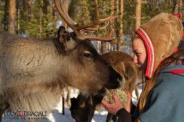 Viaggio fotografico in Svezia, Lapponia